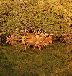 Mangroves reflections in Shoal Bay on the Kimberley coast.