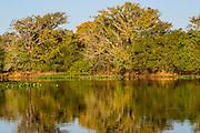 Brazil; Mato Grosso; Pantanal