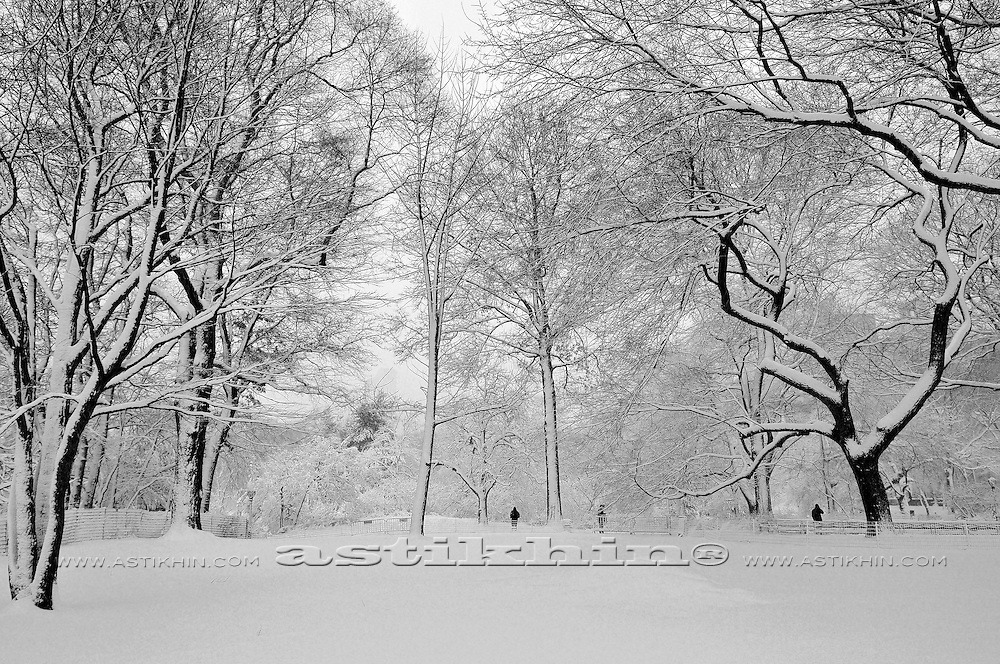 Winter in Central Park, Manhattan.