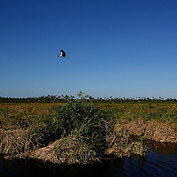 EVERGLADES, FL -- Open spaces and wildlife mix in the the expansive Everglades along US 41 on the way to the Gold Coast.  (PHOTO / CHIP LITHERLAND)