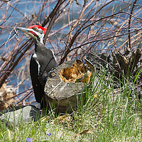 http://Duncan.co/woodpecker