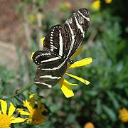 Desert Botanical Gardens Butterfly Exhibit 2006