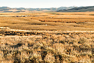 Big Hole Valley, cattle, SW Montana, Bitterroot Mountains