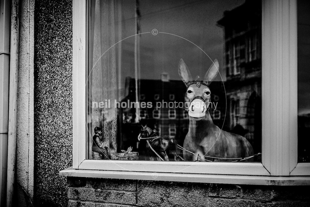 Seafront, Cleethorpes, North East Lincolnshire, United Kingdom, 29 January, 2017. Pictured: Donkey in the window, Cambridge Street