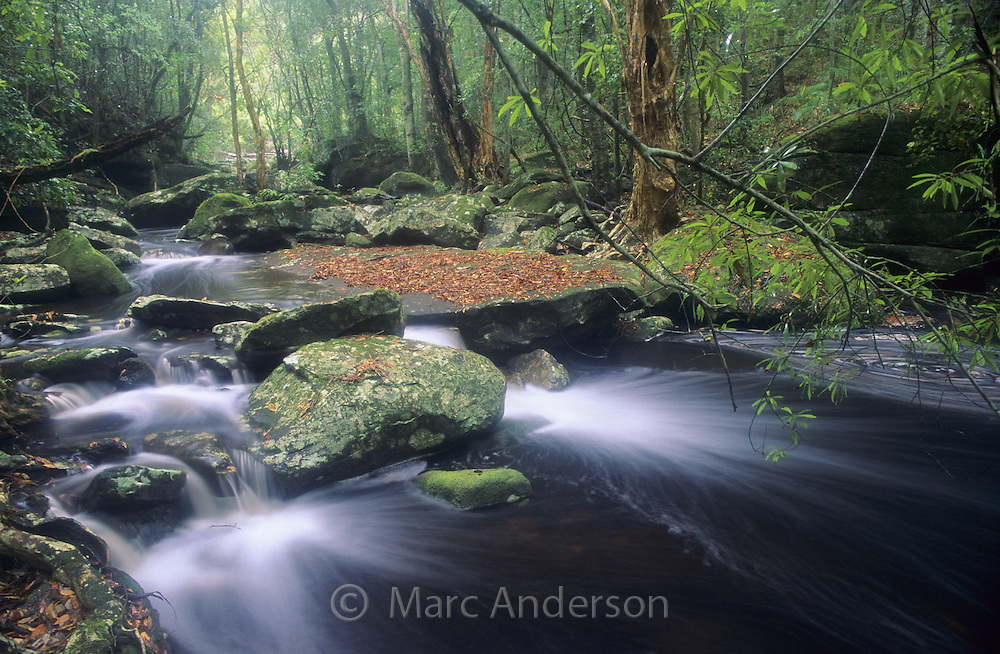 Beautiful flowing rainforest creek, Royal National Park, Australia.
