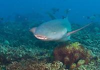 Jan - April 2013 Guam Images