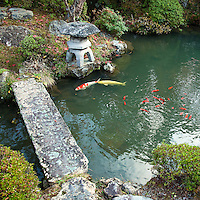 Carp Pond at Ekoin - Koyasan is one of the best places to experience a temple stay in Japan.  Carp pond and Japanese garden at Ekoin one of the more popular temples for foreign visitors at Koyasan.  One reason is that most of the young monks speak English, and Ekoin is well accustomed to foreign visitors.  Also Ekoin has morning prayer services and fire burning ceremonies that visitors can observe.