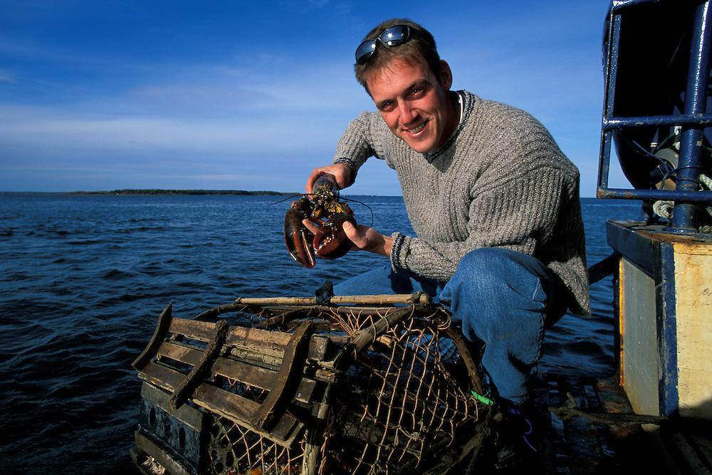 Canada, New Brunswick, Shediac, Eric LeBlanc harvests lobsters from Shediac Bay on autumn afternoon