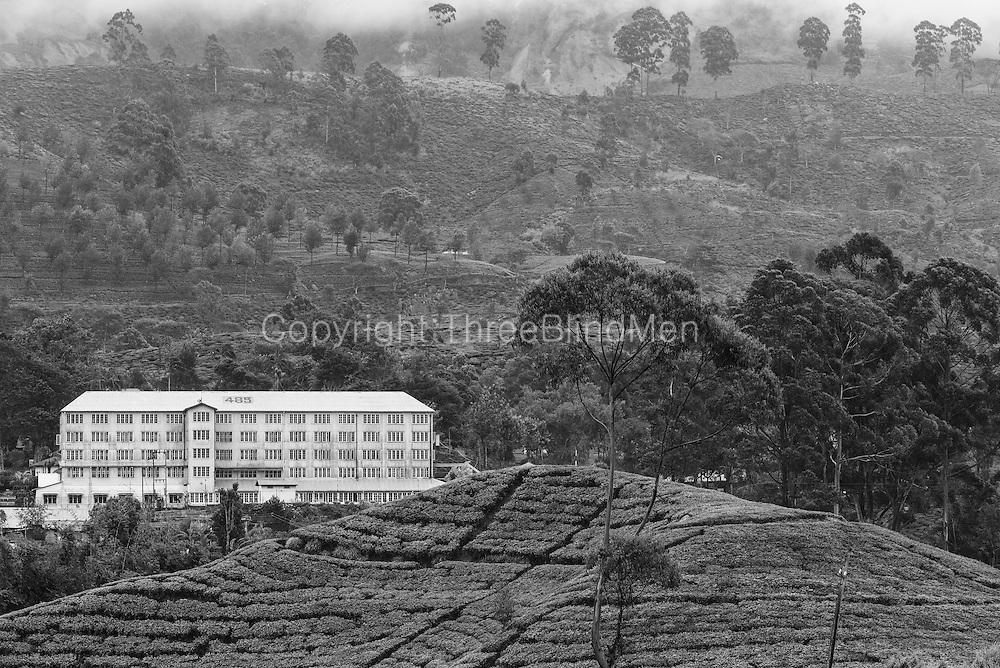 Bogawana Estate factory. Bogawantalawa.