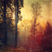 Foggy November morning with the sun coming up - texturized photograph