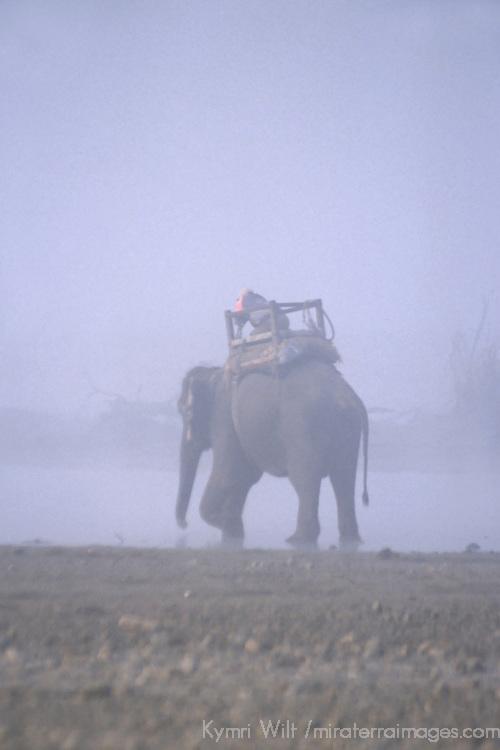 Asia, Nepal, Chitwan. Elephant in mist, Chitwan National Park.