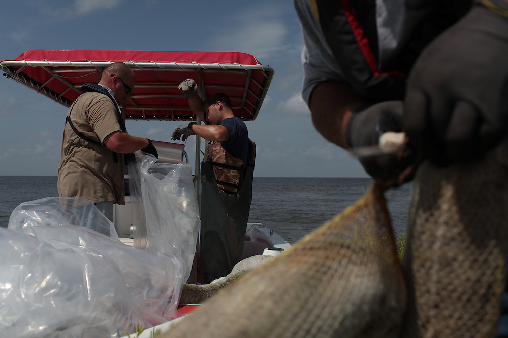 Delacroix Island fishermen working for St Bernard Parish collect 209 bags of absorbent boom around Black Bay, LA on July 19, 2010.