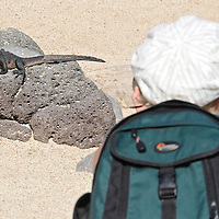 Model release photo of a tourist observing a marine iguana
