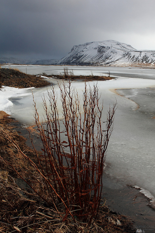 Dried reeds blow in the wind by a small lake near Rif along the north coast of Western Iceland's Snaefellsnes Peninsular.