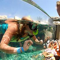Snorkel Coral Reef Pool&amp;#xA;Ocean World Interactive Marine Park, Puerto Plata, Dominican Republic, Caribbean Sea<br />
