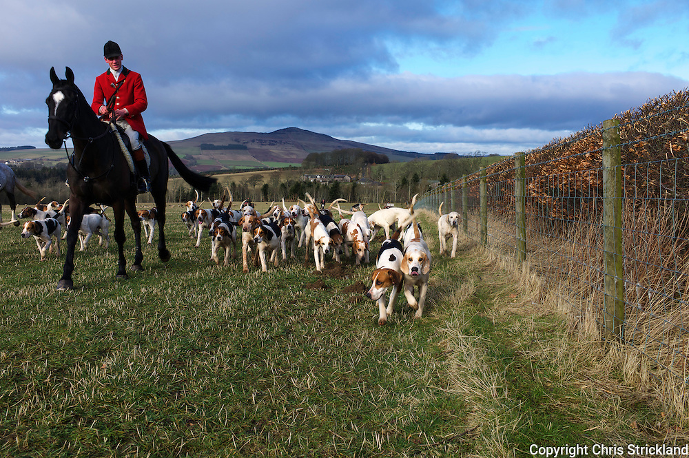 Hounds of the Jedforest Hunt hack to a meet across farmland in the heart of their hunting country near Bonchester Bridge.