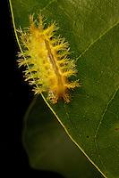 Caterpillar on leaf.