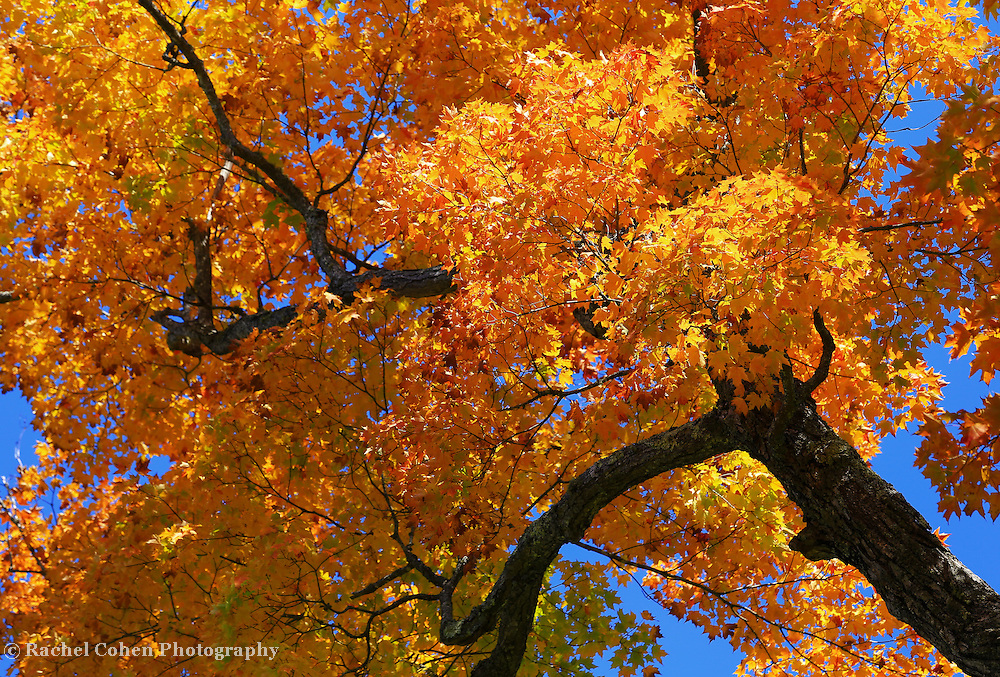 &quot;Golden Branches Sway&quot;<br />