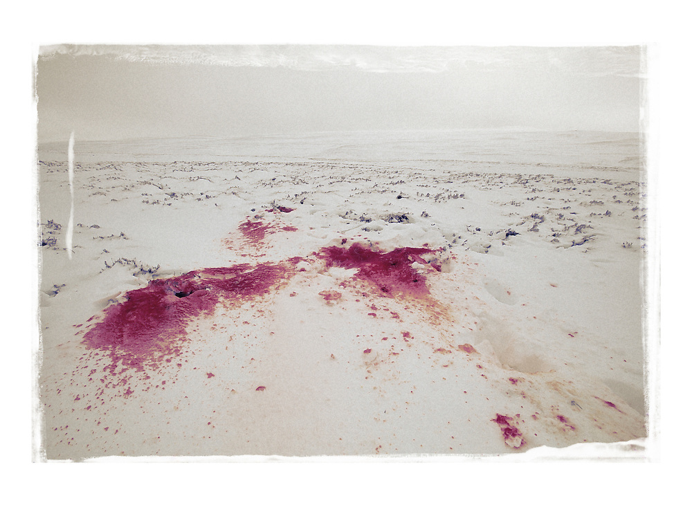 Snow stained with the blood of a recently shot red deer