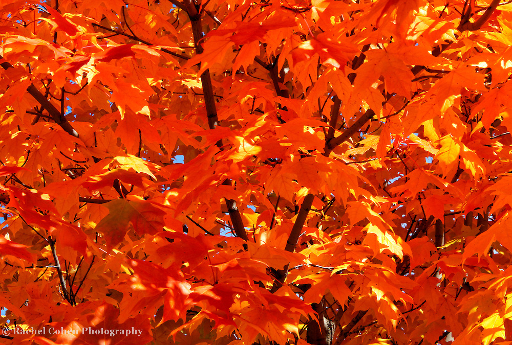 &quot;Orange&quot; <br />