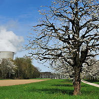 Trees in blossom and Leibstadt nuclear power station, which stands close to the German border.<br /> The Swiss are due to vote shortly in a referendum whether to quit nuclear power, which via its five reactors, on four sites, provide almost 40% of the country's power
