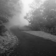 Fog shrouds this rural road in the Upcountry on Maui, HI.