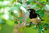Sri Lanka - Birdlife
