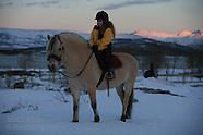 25: WINTER TOUR FJORDING HORSE IN SNOW