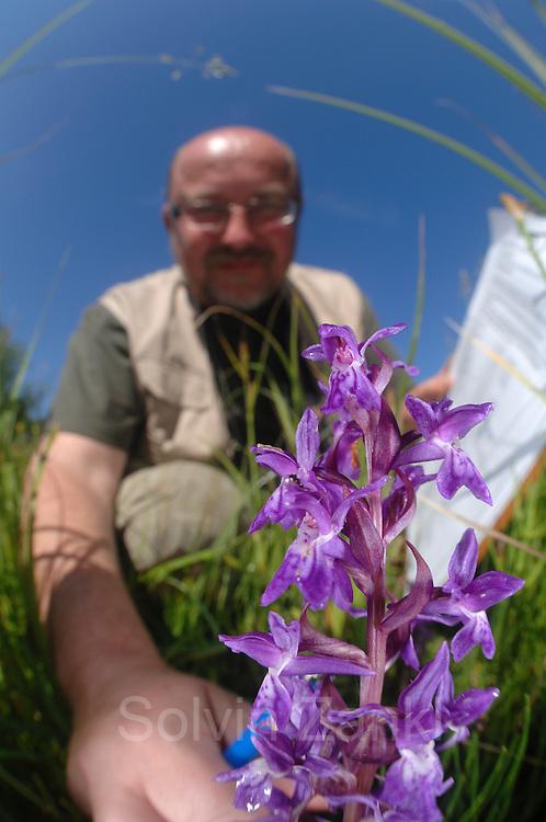Rainer Ziebarth Experte für höhere Pflanzen (Land) entdeckt das Breitblättrige Knabenkraut (Dactylorhiza majalis)