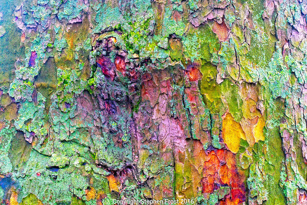 Colourful lichen on a winter tree trunk.<br />