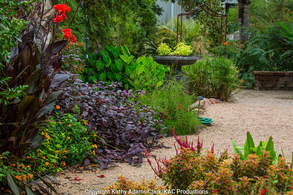 Garden, canna lily, sweet potato, firecracker, Houston, late summer, Texas.