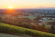 Cristom estate vineyards, Jesse Vineyard, Eola-Amity AVA, Willamette Valley, Oregon
