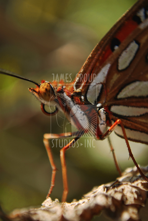 A macro shot of a butterfly close-up