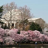 The Jefferson Monument during the Cherry Blossom Festival.