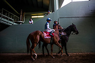 ARCADIA, CA - MARCH 11: Denman's Call #1, with Tyler Baze, before the Triple Bend Stakes at Santa Anita Park  on March 11, 2017 in Arcadia, California. (Photo by Alex Evers/Eclipse Sportswire/Getty Images)