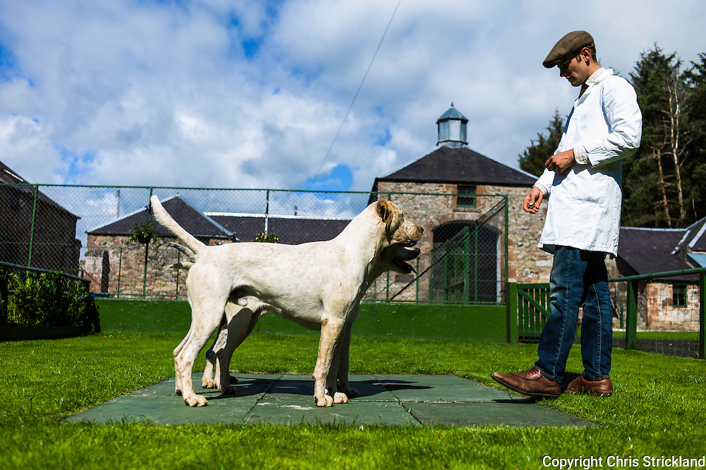 Abbotrule, Bonchester Bridge, Hawick, Scotland, UK. 19th July 2015. Huntsman Johnny Richardson works with hounds on the showing slabs. Mackside is nearest.