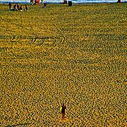 Surfer girl walking home along the beach during sunset, Santa Monica, Los Angeles, California
