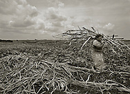"""Consuelo, Dominican Republic- A Haitian sugarcane worker gathers cane in the fields near the village of Consuelo, Dominican Republic.  A U.S. Department of Labor report issued 27 Sept 13 """"finds evidence of apparent and potential violations of labor law in the Dominican sugar sector, concerning: (1) acceptable conditions of work with respect to minimum wages, hours of work, and occupational safety and health, such as payments below the minimum wage, 12-hour work days, seven-day work weeks, lack of potable water, and the absence of safety equipment; (2) a minimum age for the employment of children and the prohibition and elimination of the worst forms of child labor; and (3) a prohibition on the use of any form of forced or compulsory labor."""" (Photo by Robert Falcetti)"""