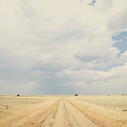road leading into the big sky prairie of montana, short grass prairie of eastern and central montana conservation photography - montana wild prairie
