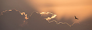 Sunset in Amboseli National Park, Kenya