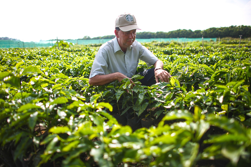 Carlos Mario Rodriguez, director global agronomy, poses in the Starbucks nursery during the 2016 Starbucks Origin Experience for Partners. Photographed in January 2016. (Joshua Trujillo, Starbucks)