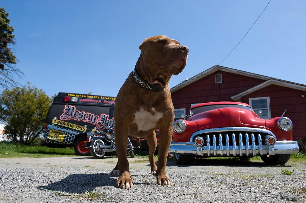 Dog Rescue On Long Island New York