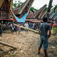 Indonesia, Sulawesi, Tana Toraja. A coffin with a body of a deceased is being put in a lokkian.<br /> <br /> The most important ceremony in Tana Toraja is a funeral, because of the beliefs, that without proper funeral rites the soul of the deceased will be not only enter the second life, but also will bring a misfortune to the whole members of the family.<br /> Although Torajan funeral tradition can vary depending on a particular village, a typical ceremony lasts for 4 days. The first day is a procession, during which the deceased is visiting the whole village. Second day it's &quot;receiving&quot;, when all the guests arrive and are welcomed by the family members. The third day is the most bloody, because of the buffalo slaughtery (the Torajans believe that the animals should follow people in the second life). On the fourth day the body is taken to the grave.