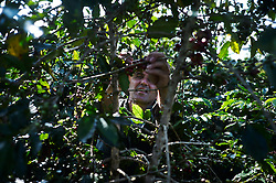 Pierre Morere picking coffee in Diem's field in Da Sar. Pierre Morere is the owner of Jangala, a socially oriented coffee business based in Bidoup Nui Ba National Park, Dalat, Lam Dong Province, Vietnam, Southeast Asia