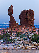 Balanced Rock glows at dusk in Arches National Park, Utah, USA. The Entrada Sandstone at Balanced Rock (128 feet/39 meters high) balances a caprock of the hard Slick Rock Member upon a base of the Dewey Bridge Member, a mudstone. The snow-dusted La Sal Mountains reach 12,780 feet in elevation.