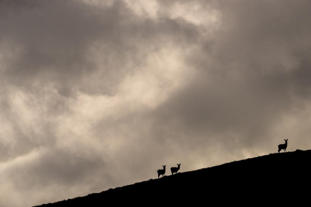 Red deer agains the sky, Jura, Scotland