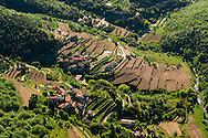France, Languedoc Roussillon, Gard, Cevennes, vallée de Taleyrac, Mont Aigoual, culture d'oignons doux des Cévennes, terrasses labourées pour le repiquage, vue aérienne