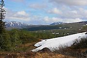 Sildratur, fra Vekta i Selbu til Sildra øverst i Sondalen i Stjørda, innom mange gamle setervoller i anledning Kulturminneåret. Snøfonna innunder Grønnfjellet bruker å ligge til ut i august. Her med rein, Vålåkleppen i bakgrunnen.