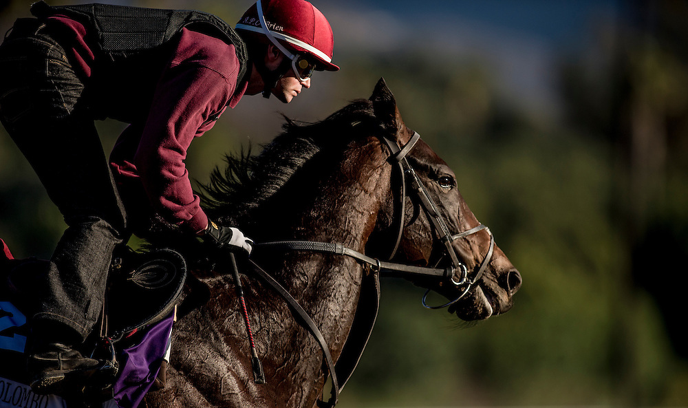 Christofo Colombo trains for the Breeders' Cup Mile at Santa Anita Park in Arcadia, California on October 31, 2013. (Alex Evers/ Eclipse Sportswire)