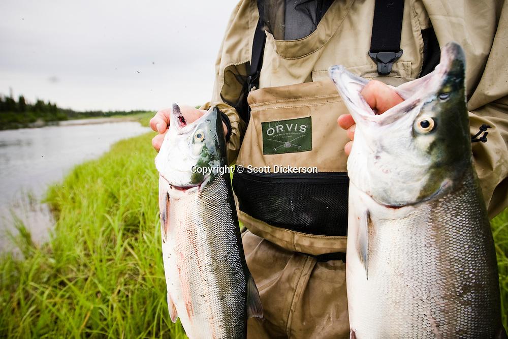 Sport fisherman holding up sockeye salmon scott dickerson for Gustafson s smoked fish